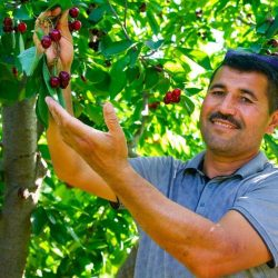 Из Кувы будет экспортирована плодоовощная продукция на 60 миллионов долларов