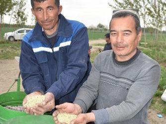 Инновация: Ғўза қатор орасида  соя парваришланади